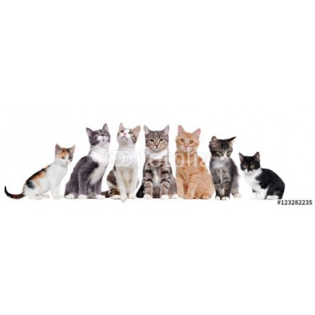 Panele szklane A group of cats sitting in a raw on white background
